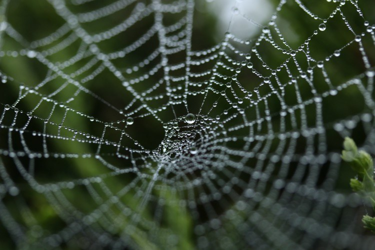 spiderweb with water droplets