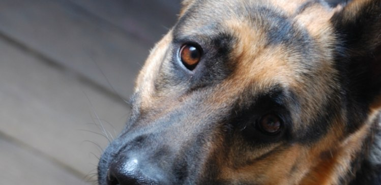 Close-up of a dog's face looking up