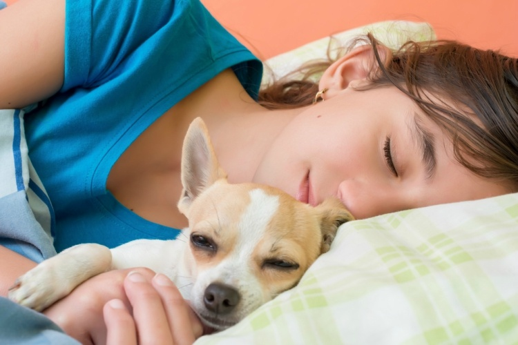 Girl sleeping with little chihuahua dog