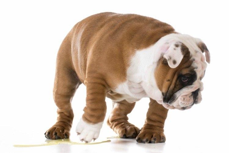 PuppyPeeingforList