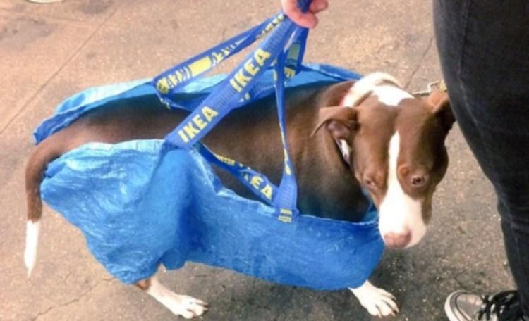 dog in Ikea bag