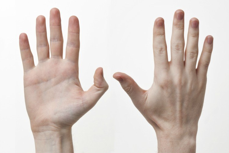 Front and back of hands.