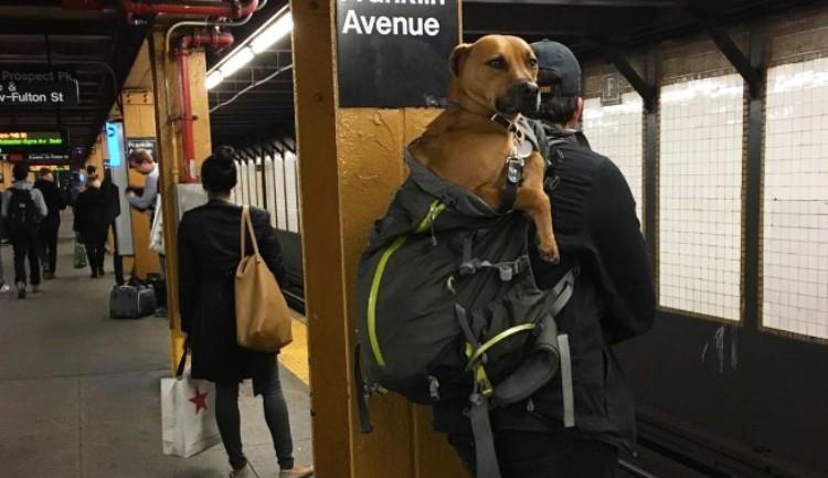 dog subway 7
