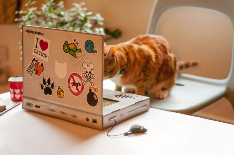 Image of cat on laptop