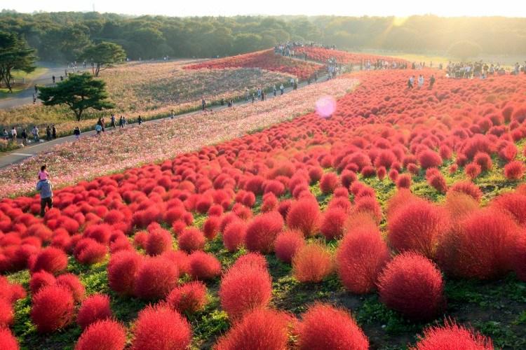 hitachi autumn