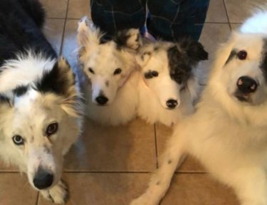 Image of cuddle clones dog slippers