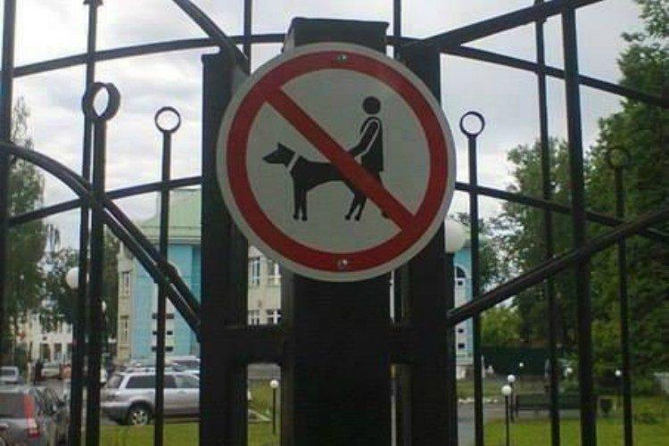 fail dog park