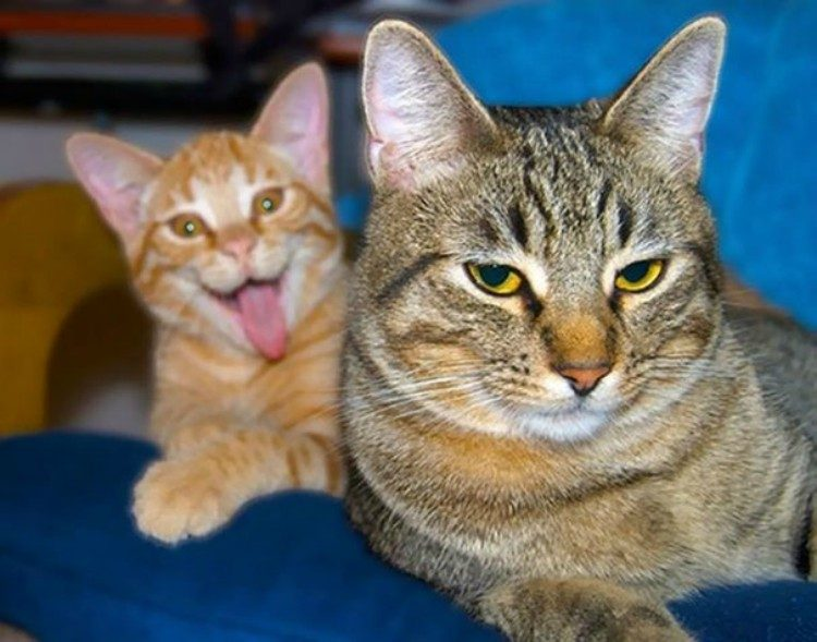 Funny face cat.
