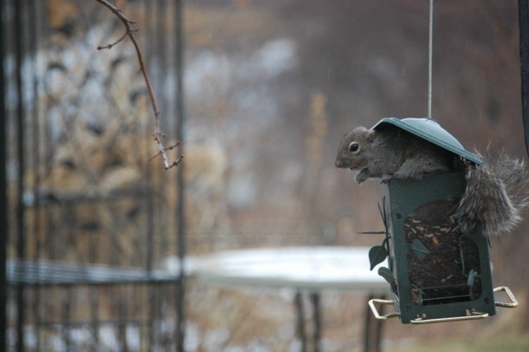 squirrel on bird house