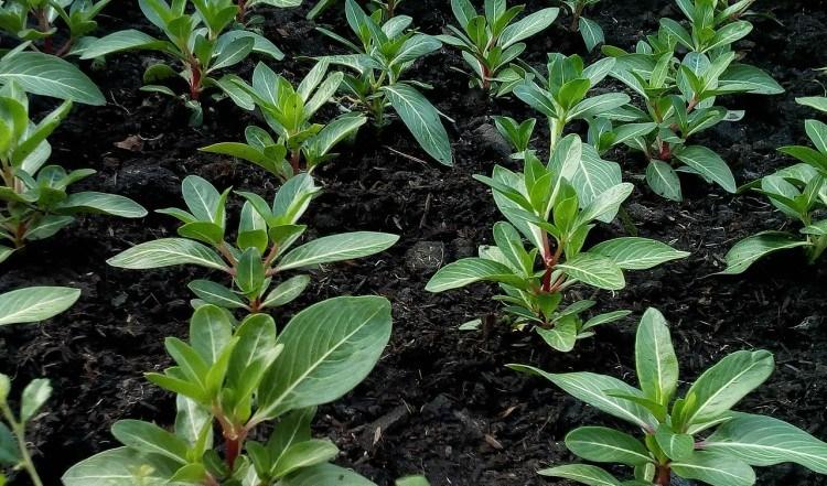 green starter plants