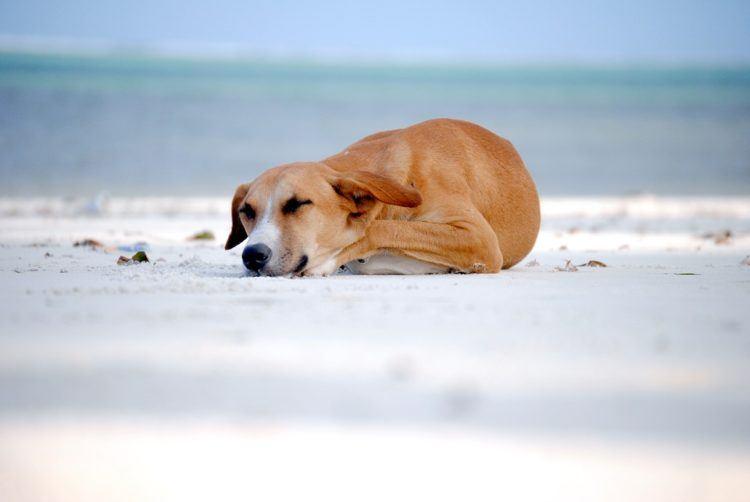 Dog curled up to sleep.