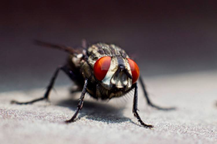 close-up view of a fly