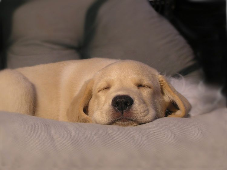 Puppy sleeping.