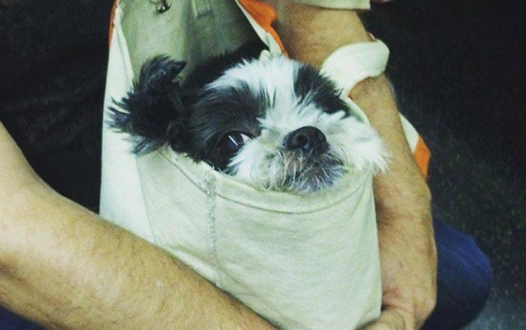 dog subway 4