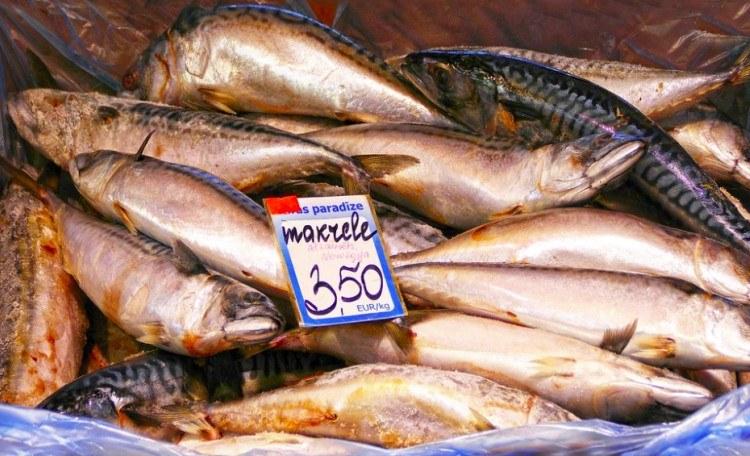 food oily fish