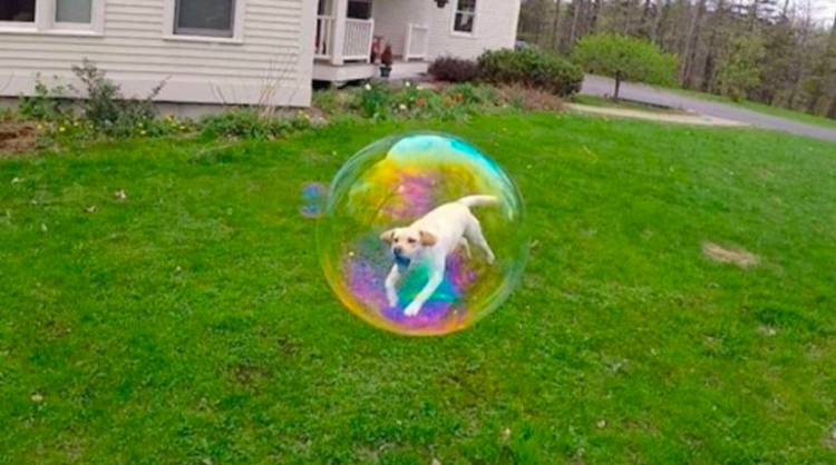 perfectly timed bubble