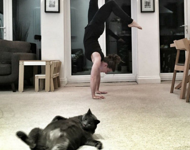 Cat on back in yoga picture.