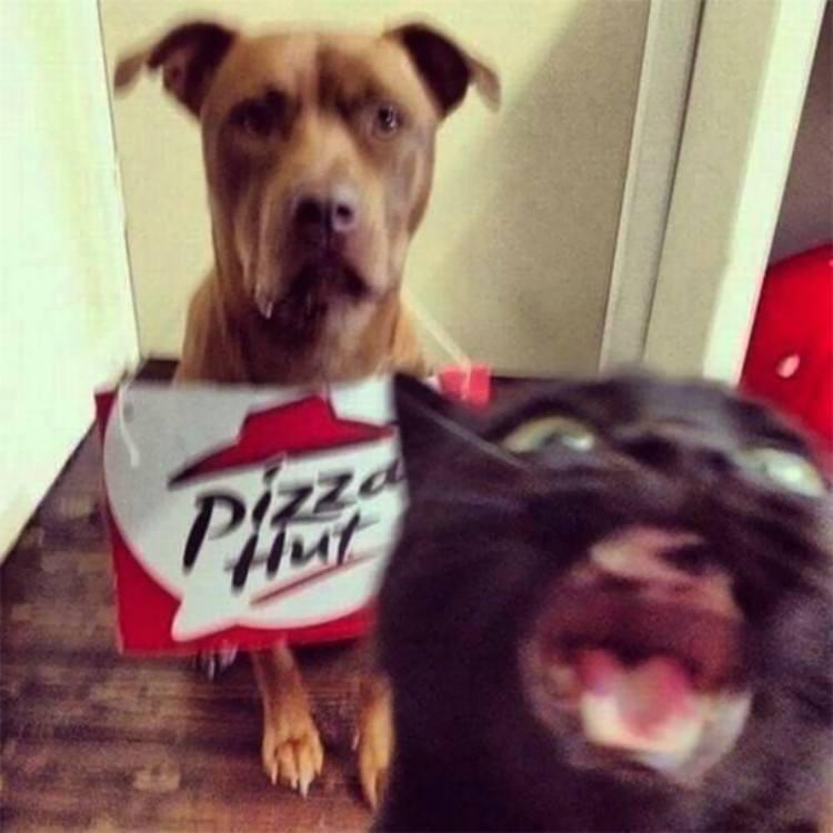 Cat photobombing dog.