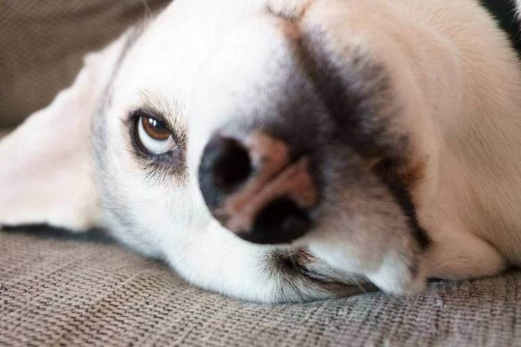 Dog with one eye open.