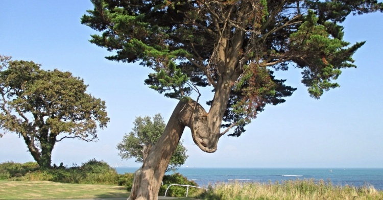 Bent tree trunk.