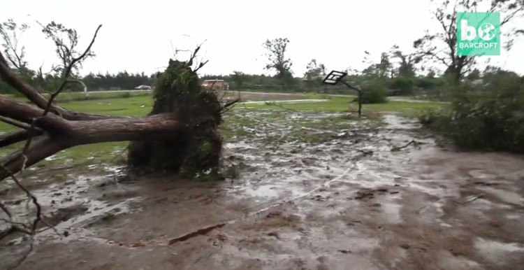 Image of uprooted tree after tornado.