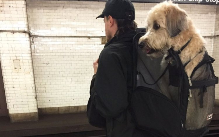 dog subway 5