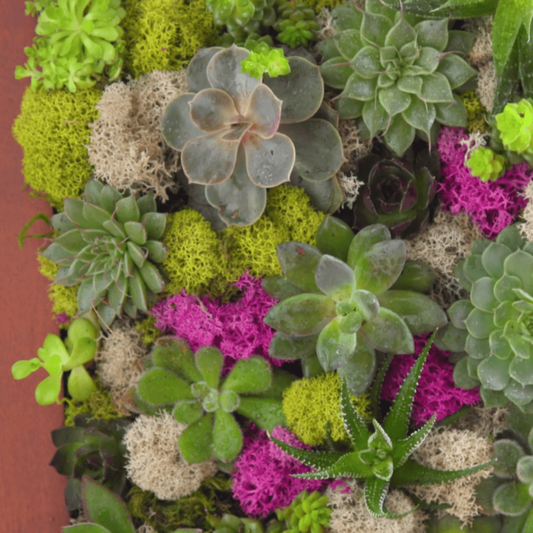 Succulent Wall Garden close-up finished