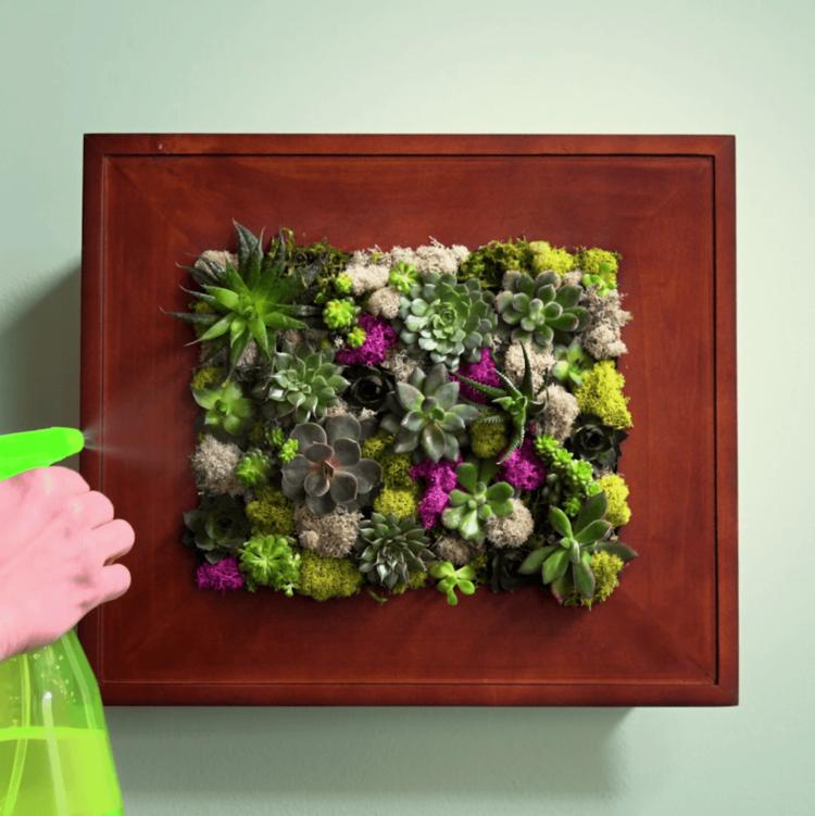 Succulent Wall Garden misting