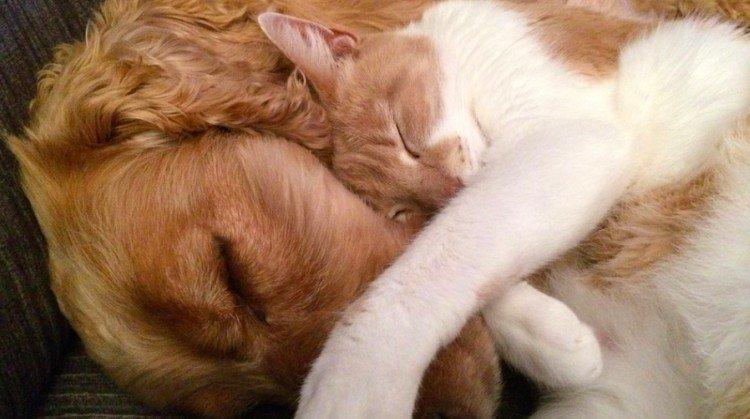 cat adopts dog