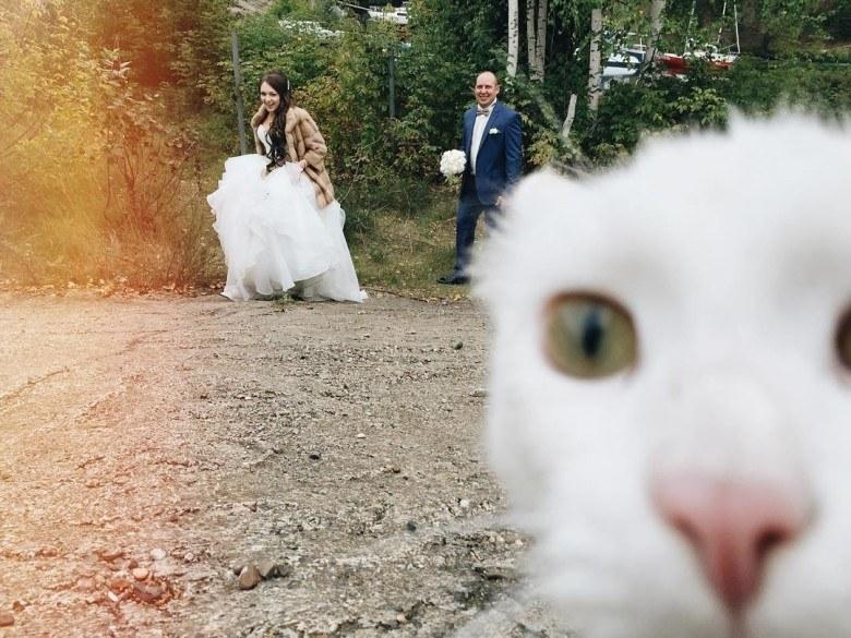 White cat photobombing.