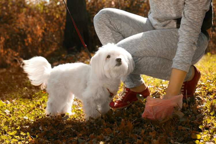 Image of woman gathering dog poo in park