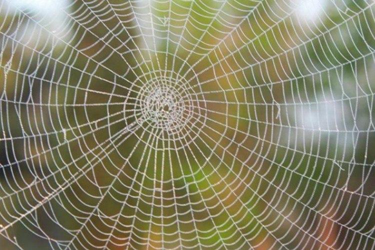 nature spiderweb