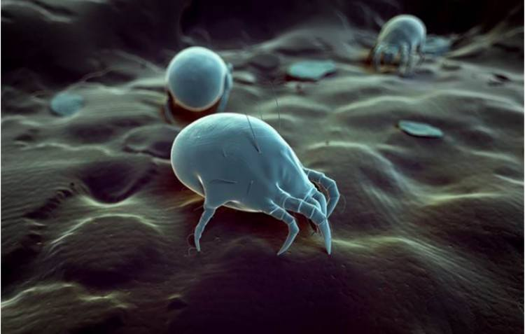 close up of animation of dust mites