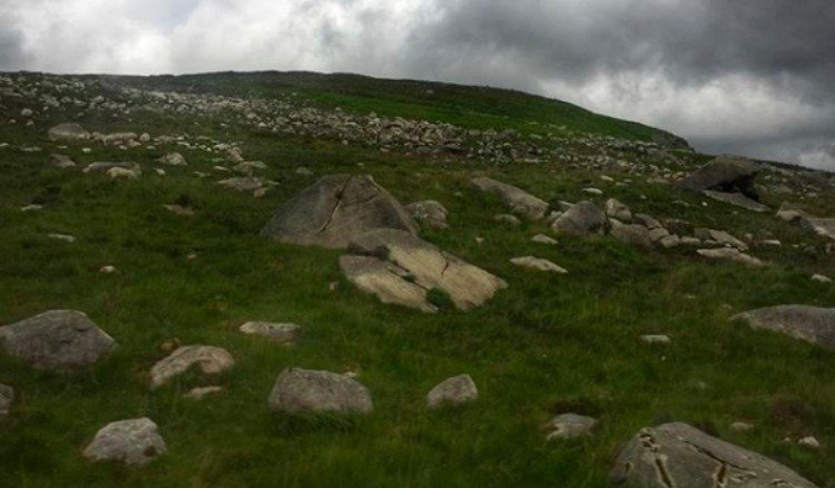 sheep hiding on hill