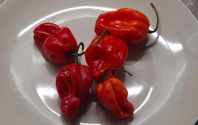 habanero peppers on white plate