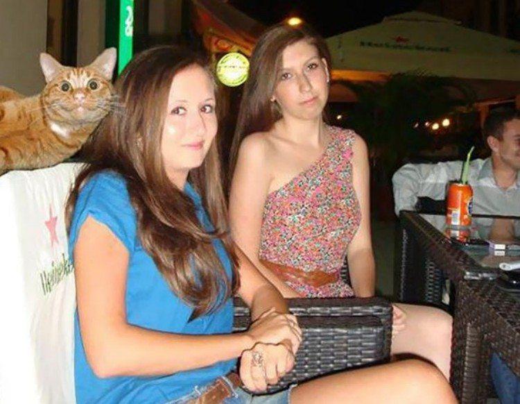Cat photobombing picture.