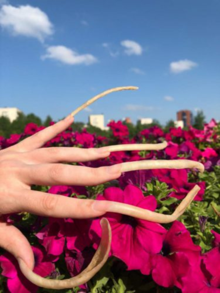 Image of very long nails outside