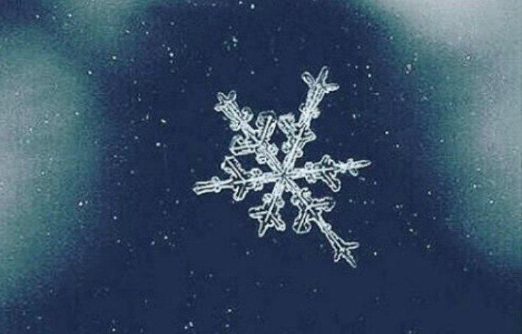 nature snowflake