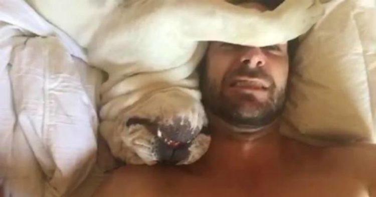 GrumpyBulldogWakingUp