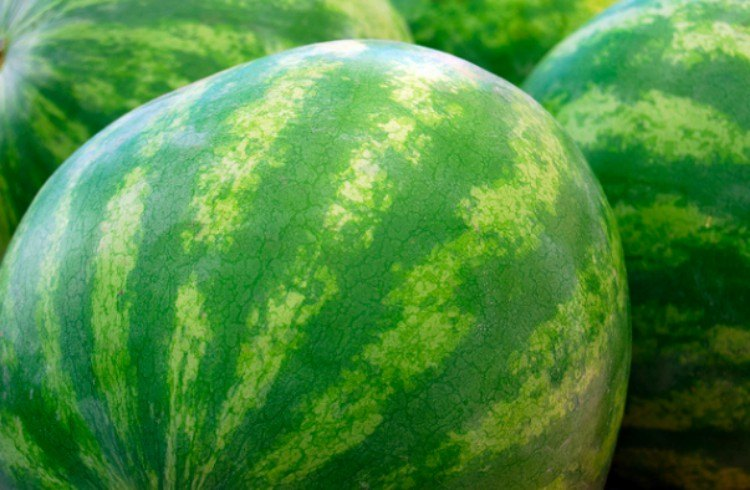 watermelon webbing