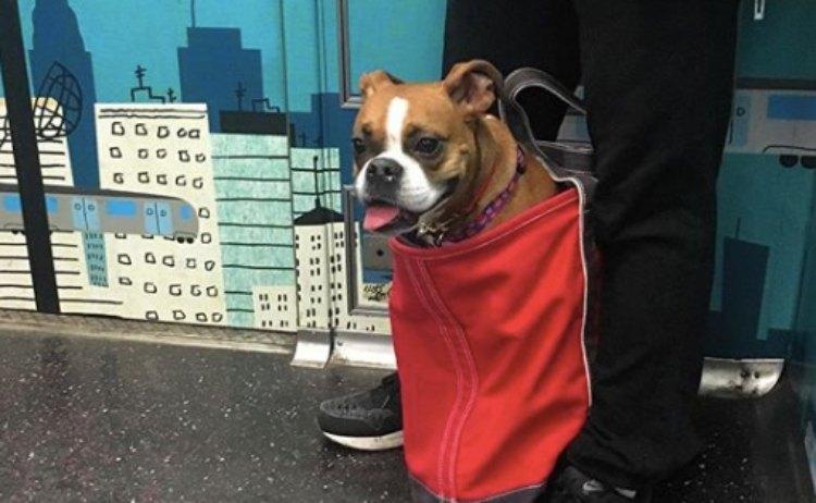 dog subway 13
