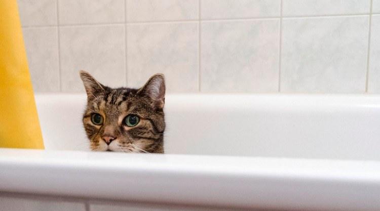 cat in tub