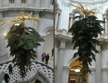 Image of upside down tree.
