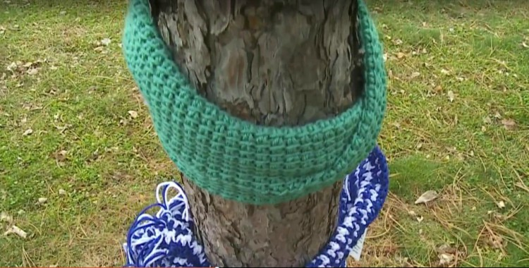 Image of scarves on trees.