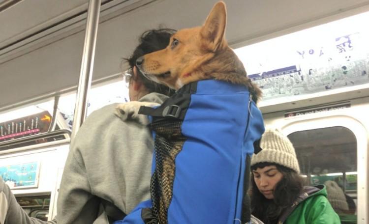 dog subway 10