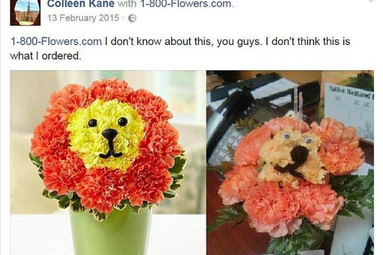 fail lion flowers