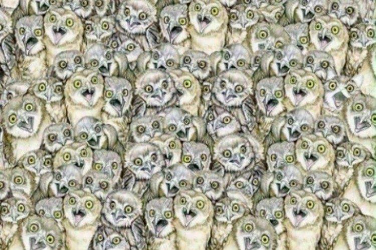 owl puzzle with hidden cat
