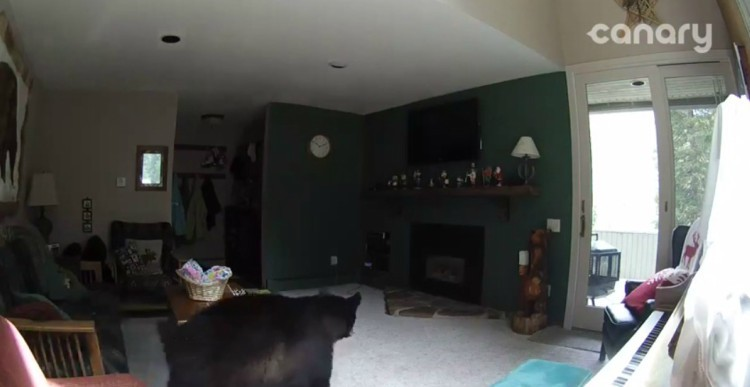 Image of bear in the house.
