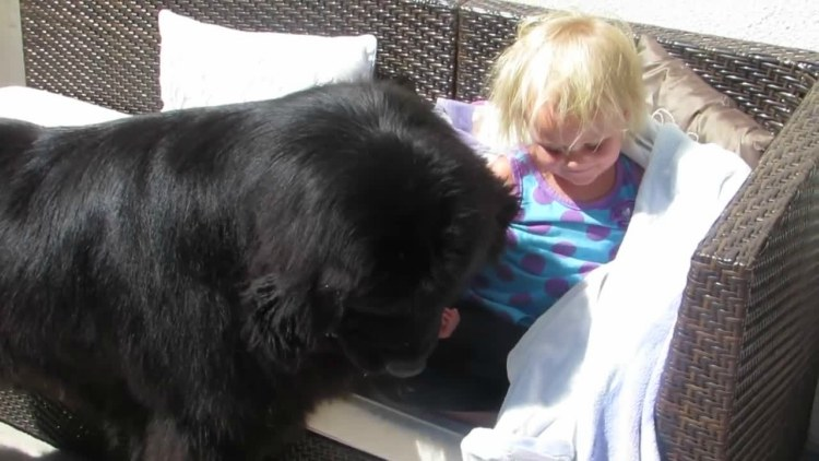 Sebastian the dog finds little girl Sierra while playing hide and go seek