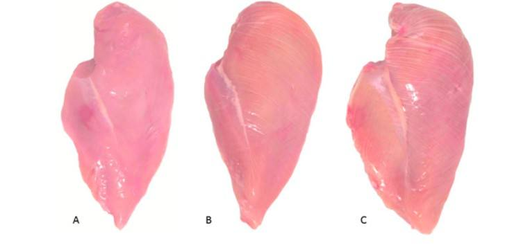 chicken breast chart with varying levels of white striation